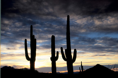 Arizona Desert Sunrise