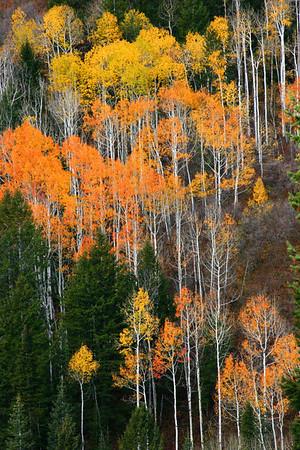 Alpine Loop in the fall near Slt Lake City, Utah
