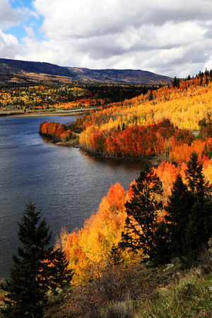 Fall Aspens At Fish Lake In Utah
