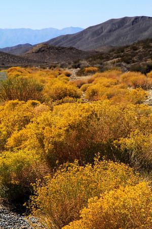 Near Death Valley National Park