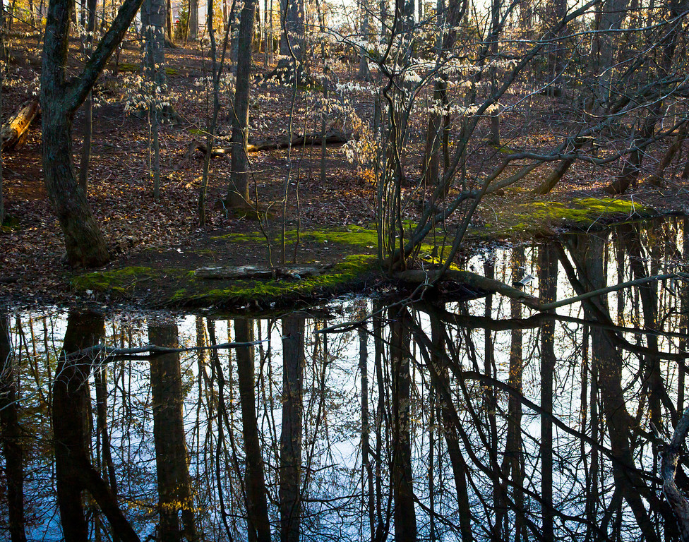 Reflections of early Spring