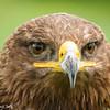 Roofvogel Happening te Kasterlee