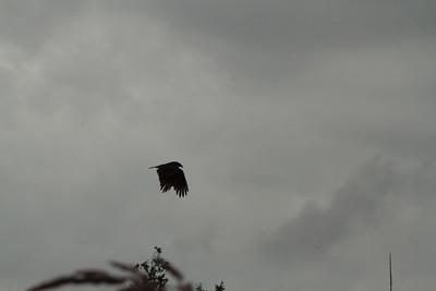 Vulture Games-18