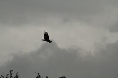 Vulture Games-15