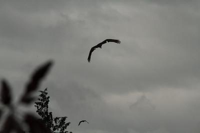 Vulture Games-7