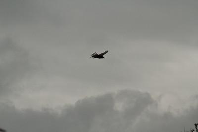 Vulture Games-14