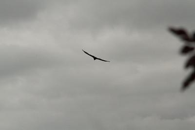 Vulture Games-10