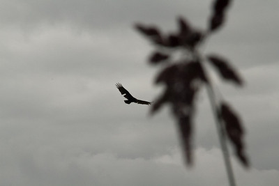 Vulture Games-11