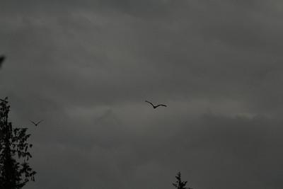 Vulture Games-6