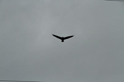 Eagle-2