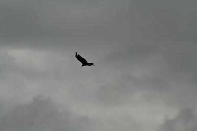 Vulture Games-4