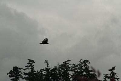 Vulture Games-16