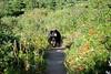 Black Bear 1715