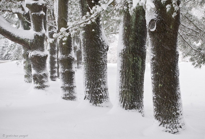 Heavy snow from a few years past, but sticking to trees