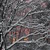 Winter2011017sig