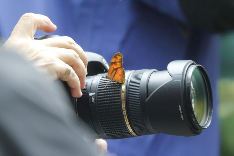 butterfly release