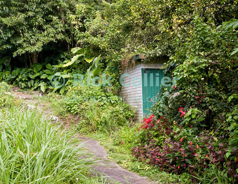 Saba - We periodically came across unoccupied buildings, which always seemed to be framed by flowers and the encroaching rain forest as we climbed the trail up Mt. Scenery.  © Rick Collier