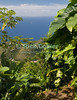 Saba - A scenic view - The Caribbean sea (ocean) view peeks through as we negotiate a steep part of the climb up Mt. Scenery.  © Rick Collier
