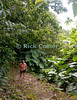 Saba - The trail gets steeper as we begin to climb out of the rain forest that shrouds the lower part of the Mt. Scenery trail, revealing glimpses of the Caribbean beyond.  © Rick Collier