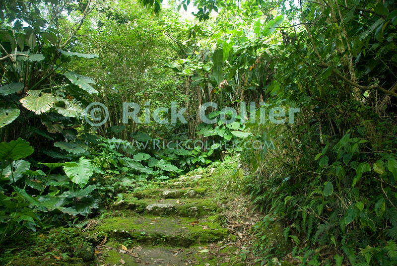 Saba - The trail up Mt. Scenery turned into a mossy, quiet forest path in places.  © Rick Collier