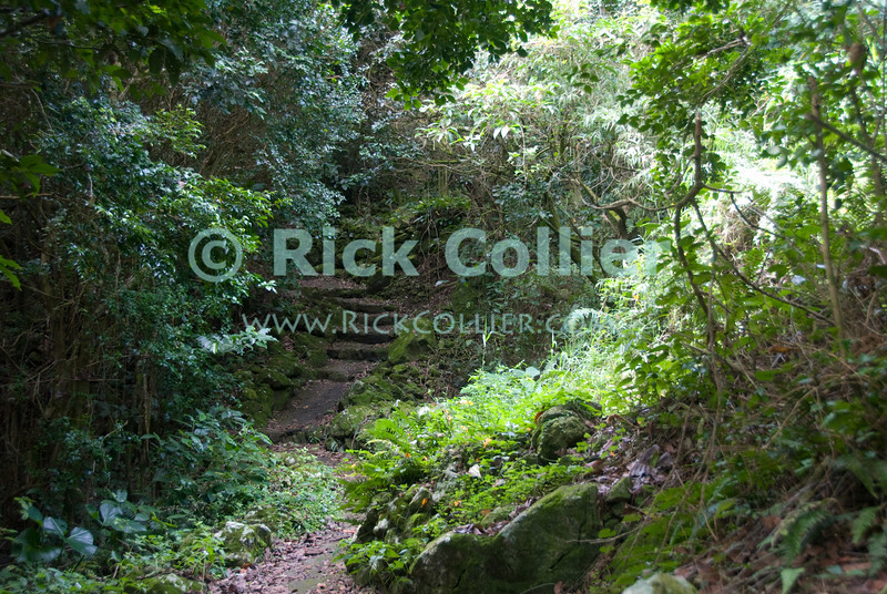 Saba - The bottom of the trail up Mt Scenery looks like a lovely path through a wooded glade.  It is pretty manageable from the lower near Windwardside.  © Rick Collier