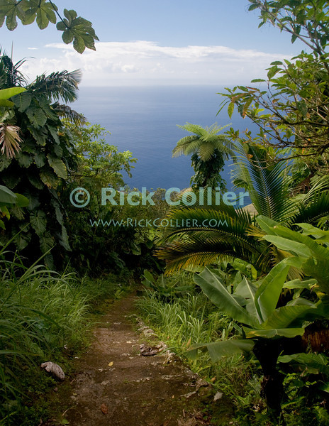 Saba - A scenic view - As we descend, the track down Mt. Scenery opens up to spectacular sea views, framed beautifully by the forest.  © Rick Collier
