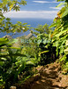 Saba - A scenic view - The track winds its way up (or down) Mt. Scenery, periodically breaking the forest canopy to offer a spectacularly framed sea view of the Caribbean.  © Rick Collier
