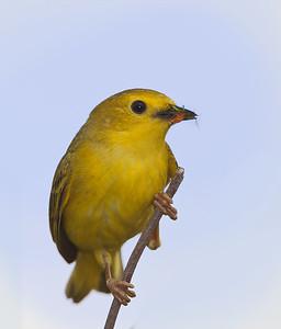 yellow_1122