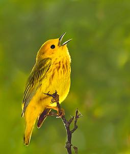 yellow-2--5382