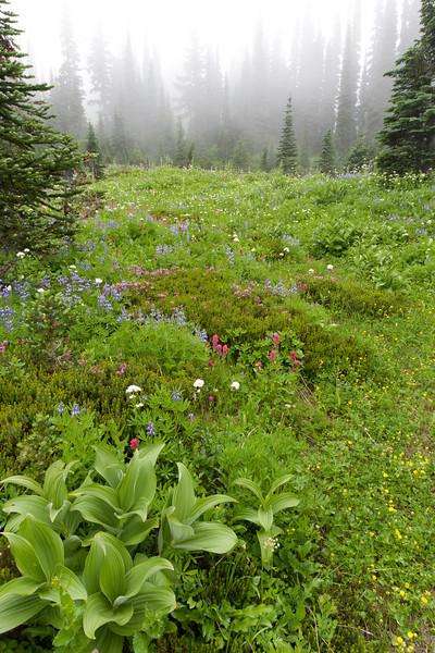 Mt Rainier-6