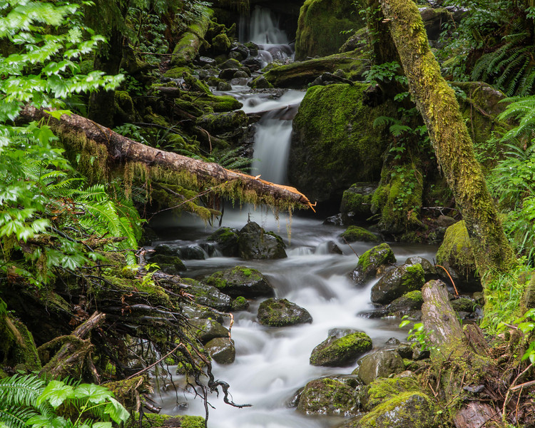 Quinault area of Olympic NP; Merriman Falls.