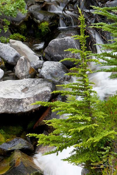 Mt Rainier-4