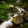 Bunch Creek Falls; Quinault area.