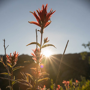 Paintbrush in backlight