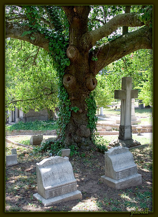 "The reverence expressed in Kilmer's classic and much loved poem seems to fit this tree in the Atlanta Cemetery. Even without the unintended results of pruning, a tree has a maternal presence; and, here seems to watch over earth's children laid to rest in this place. <br /> <br /> <br /> ""TREES""<br /> I think that I shall never see<br /> A poem lovely as a tree.<br /> <br /> A tree whose hungry mouth is prest<br /> Against the sweet earth's flowing breast;<br /> <br /> A tree that looks at God all day,<br /> And lifts her leafy arms to pray;<br /> <br /> A tree that may in summer wear<br /> A nest of robins in her hair;<br /> <br /> Upon whose bosom snow has lain;<br /> Who intimately lives with rain.<br /> <br /> Poems are made by fools like me,<br /> But only God can make a tree.<br /> <br /> <br /> By Joyce Kilmer."
