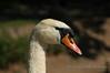 White Swan - Stockholm