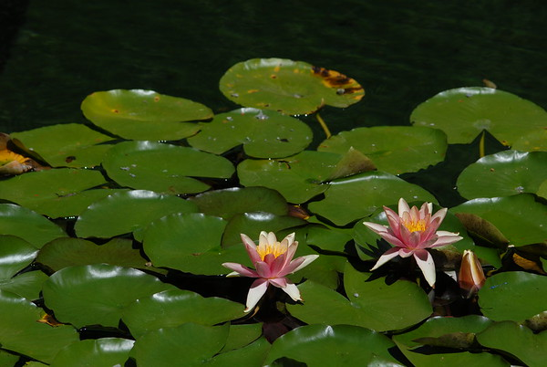 Water Plants and Flowers