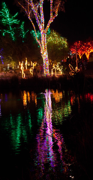 One of the scenes from the 2011 Zoolights celebration at the Phoenix Zoo.  Over 3.5 million lights were used and coordinated with music.  This was the 20th year of Zoolights.