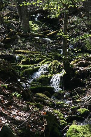 A Woodland Runoff