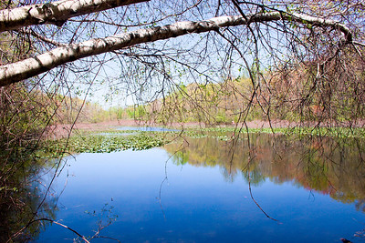 The Lake at Tenafly Nature Center