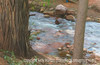 Falcon Creek in Manitou Springs, CO