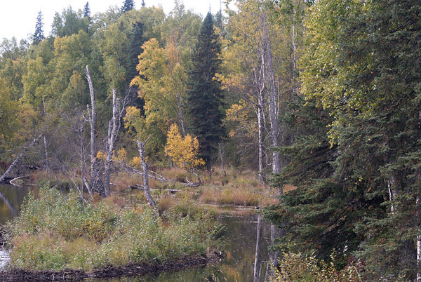 This small beaver pond was photographed in early September just north of Talkeetna, Alaska.