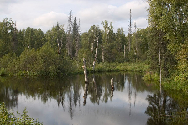 This small, unnamed pond is located just south of Talkeetna, Alaska. The photogaph was taken in late summer.
