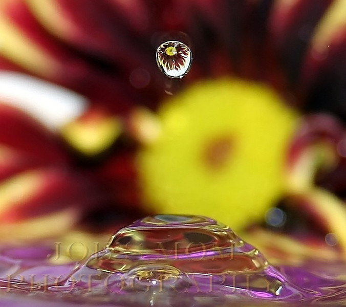 Floral Refraction Drop III