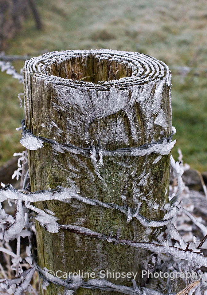 Ice on Fence Post