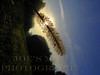 Pony Tail Sunrise