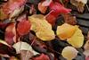 Leaves8805