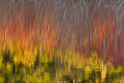 Prior Lake Reflection