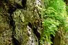 Waterfalls Spring 2010-10