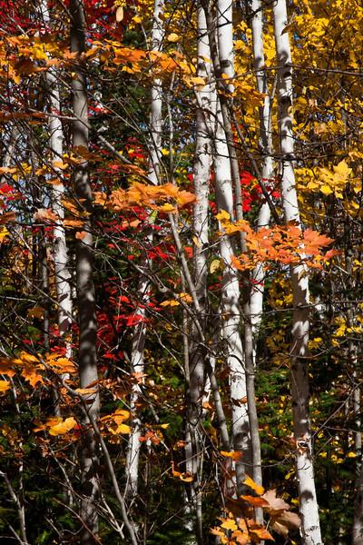 Winnipeg Photographers (Nature)